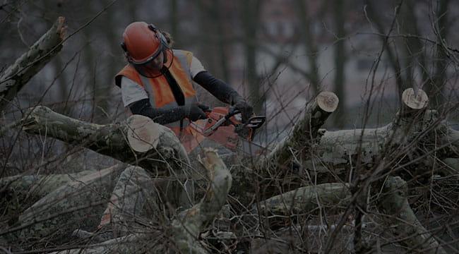 Pine Bluff Tree Service